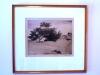 duinenboom